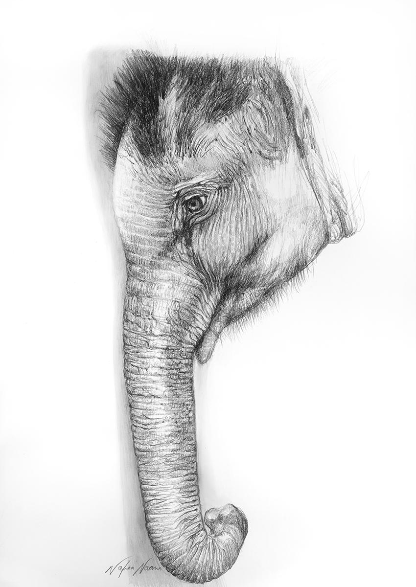 nafissa-elephant-7.jpg