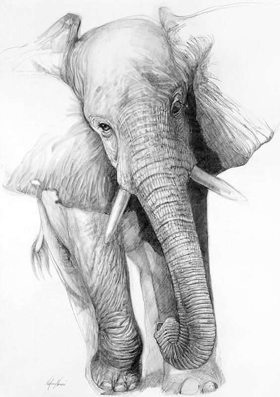 nafissa-elephant-8_0.jpg