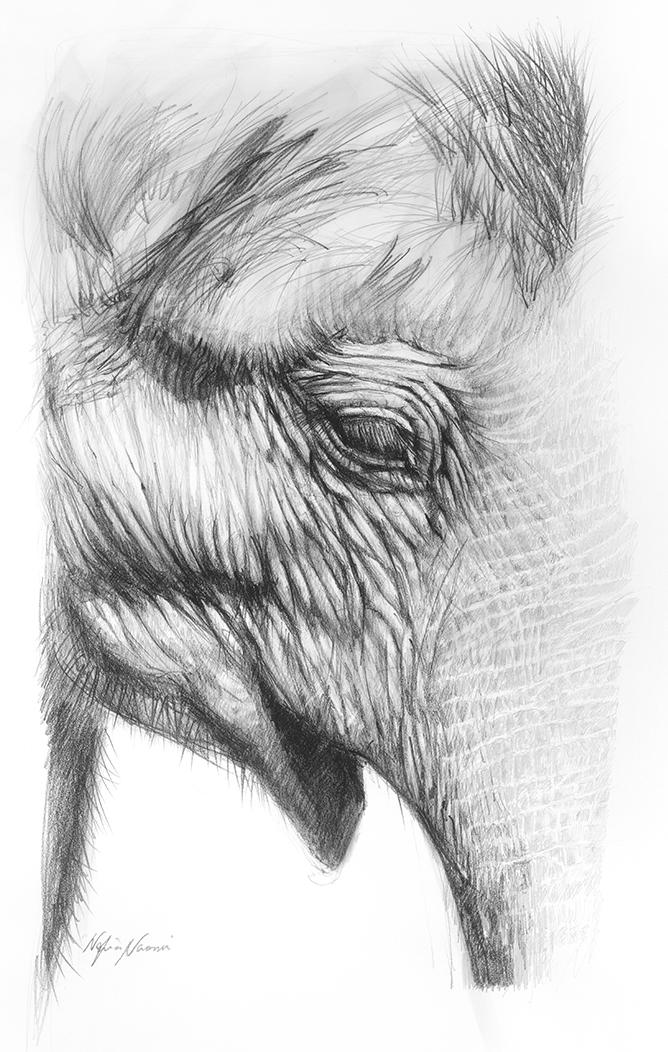 nafissa-elephant-8.jpg