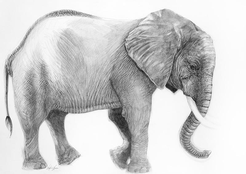 nafissa-elephant-9_0.jpg