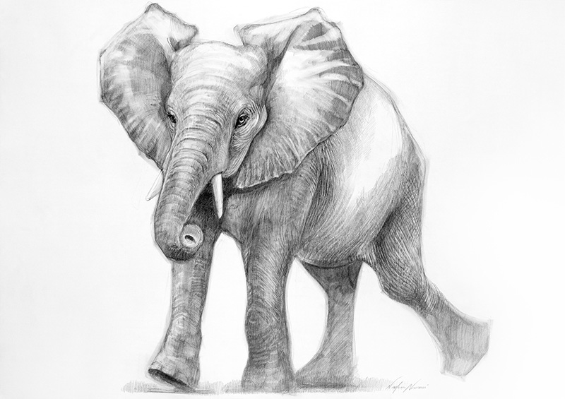nafissa-elephant-10_0.jpg
