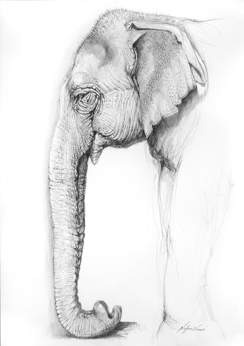 nafissa-elephant-10.jpg