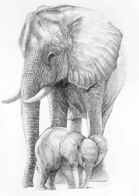 nafissa-elephant-11_0.jpg
