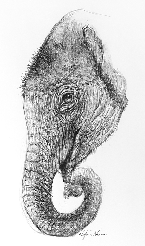 nafissa-elephant-13.jpg