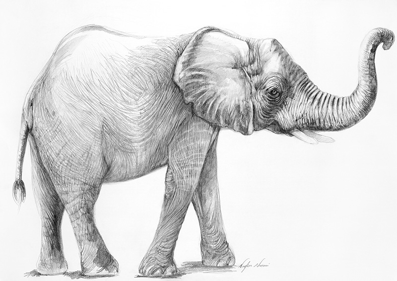nafissa-elephant-14_0.jpg