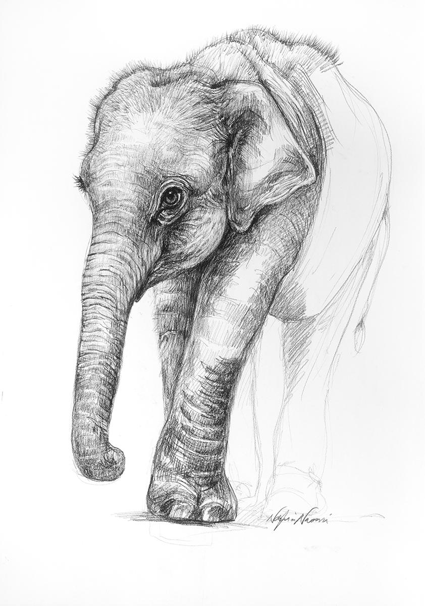 nafissa-elephant-15.jpg