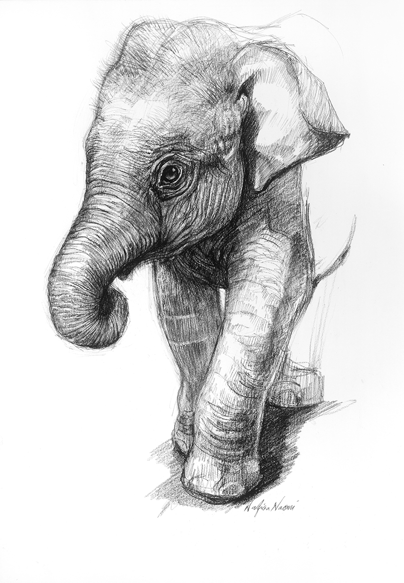 nafissa-elephant-17.jpg