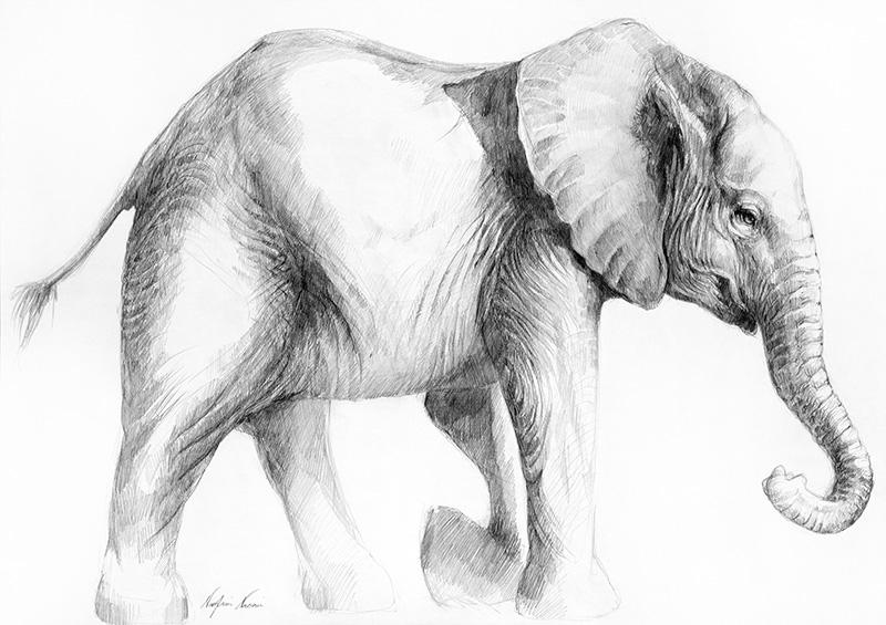 nafissa-elephant-23_0.jpg