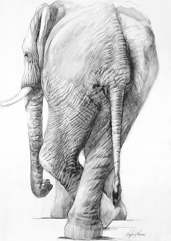 nafissa-elephant-24_0.jpg