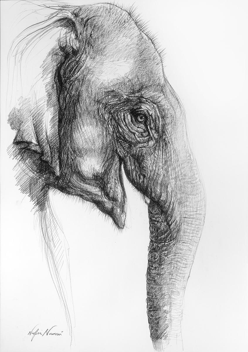 nafissa-elephant-24.jpg