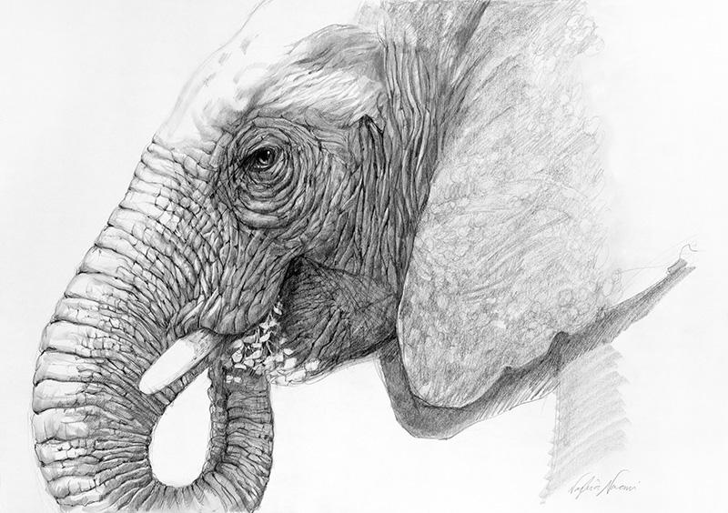 nafissa-elephant-25_0.jpg