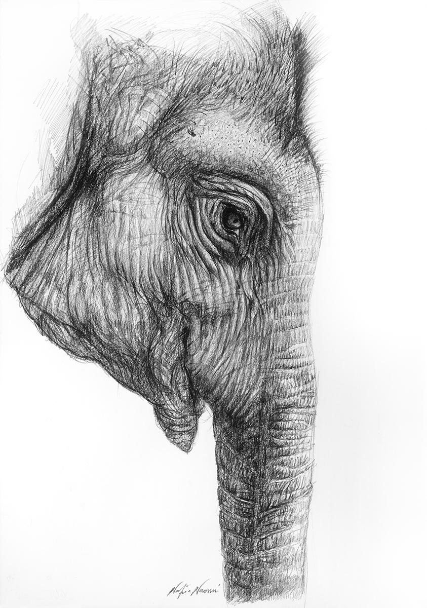 nafissa-elephant-26.jpg