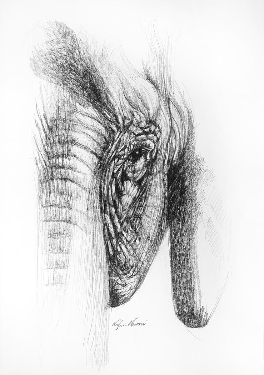 nafissa-elephant-27.jpg