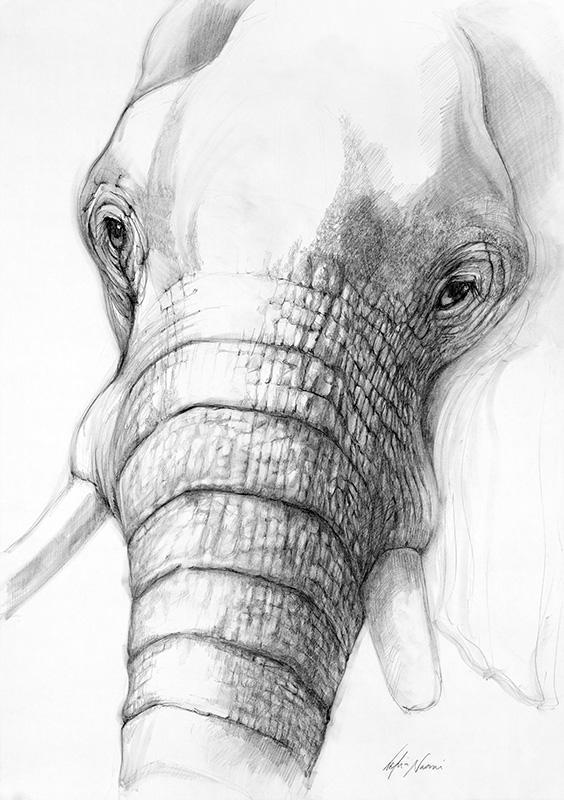 nafissa-elephant-27_0.jpg