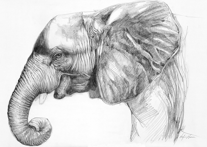 nafissa-elephant-30.jpg