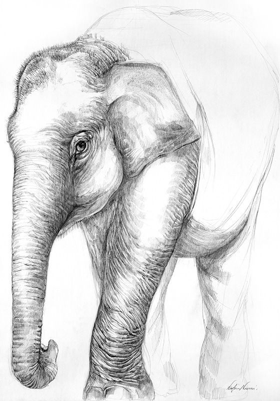 nafissa-elephant-34.jpg