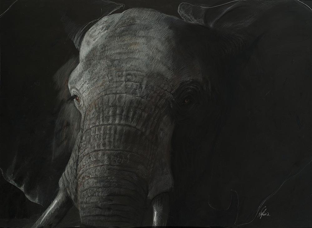 NAOMI,Nafisa_Elephant.jpg