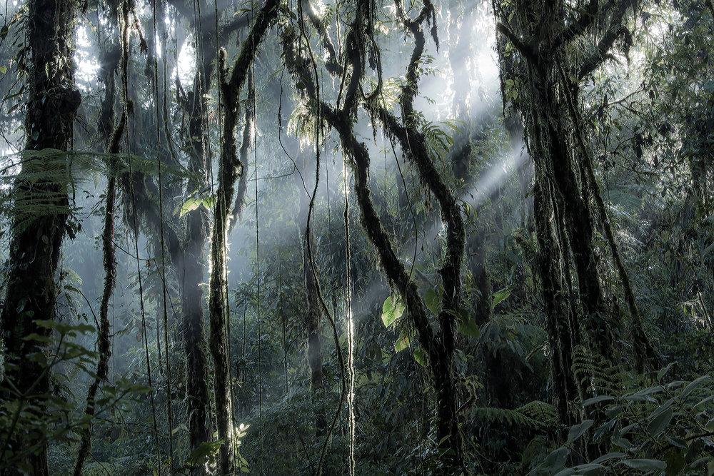 Sky's Creepers - Costa Rica 2016
