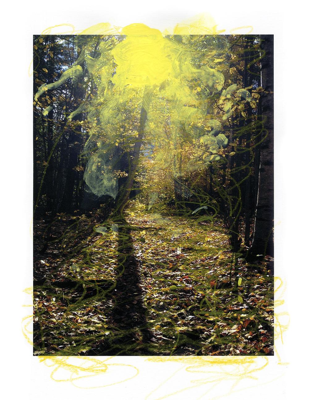 sunlight woods001.jpg