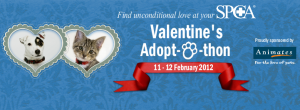 RNZSPCA Adoptathon Avalanche City Love Love Love