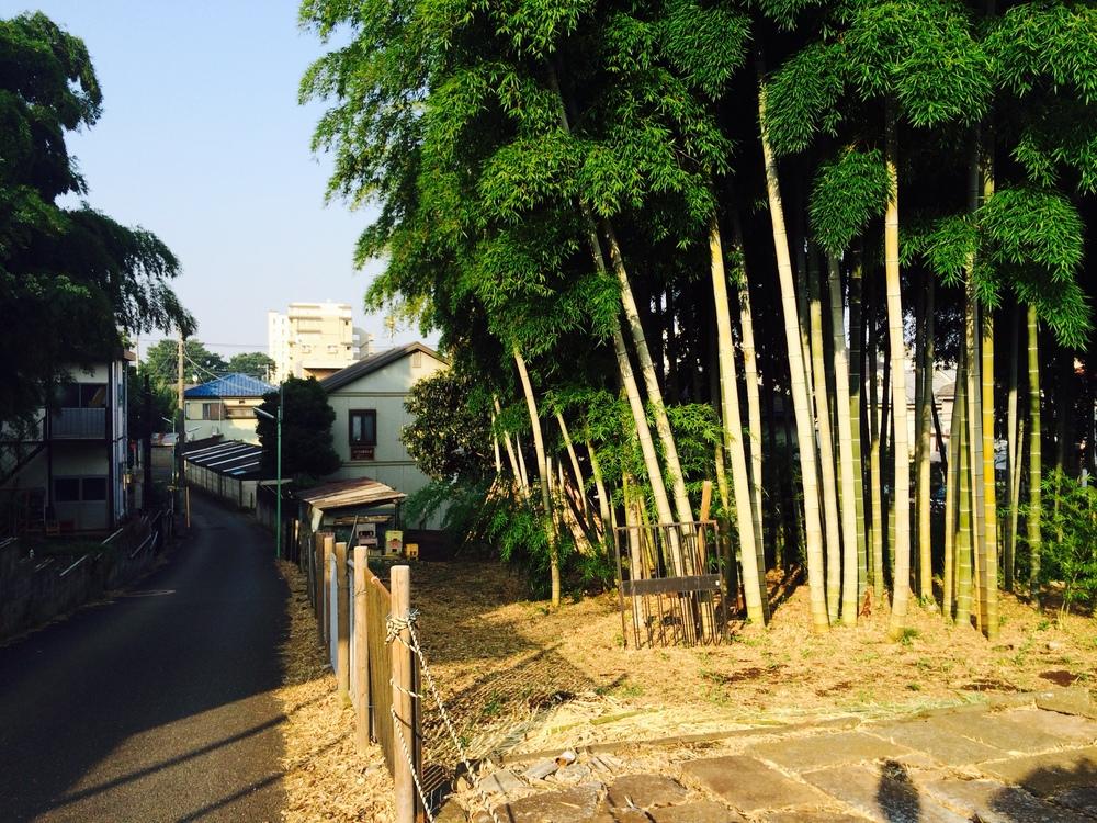 tokyo bambus.jpg