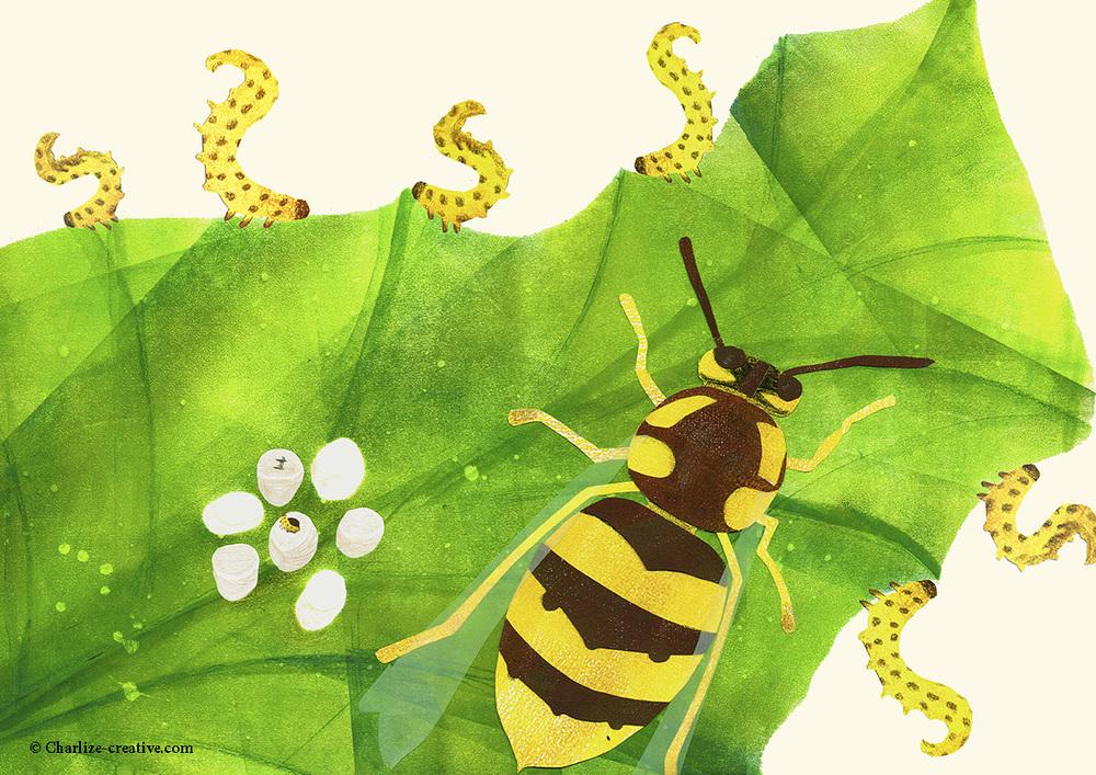 Wasp print.jpg