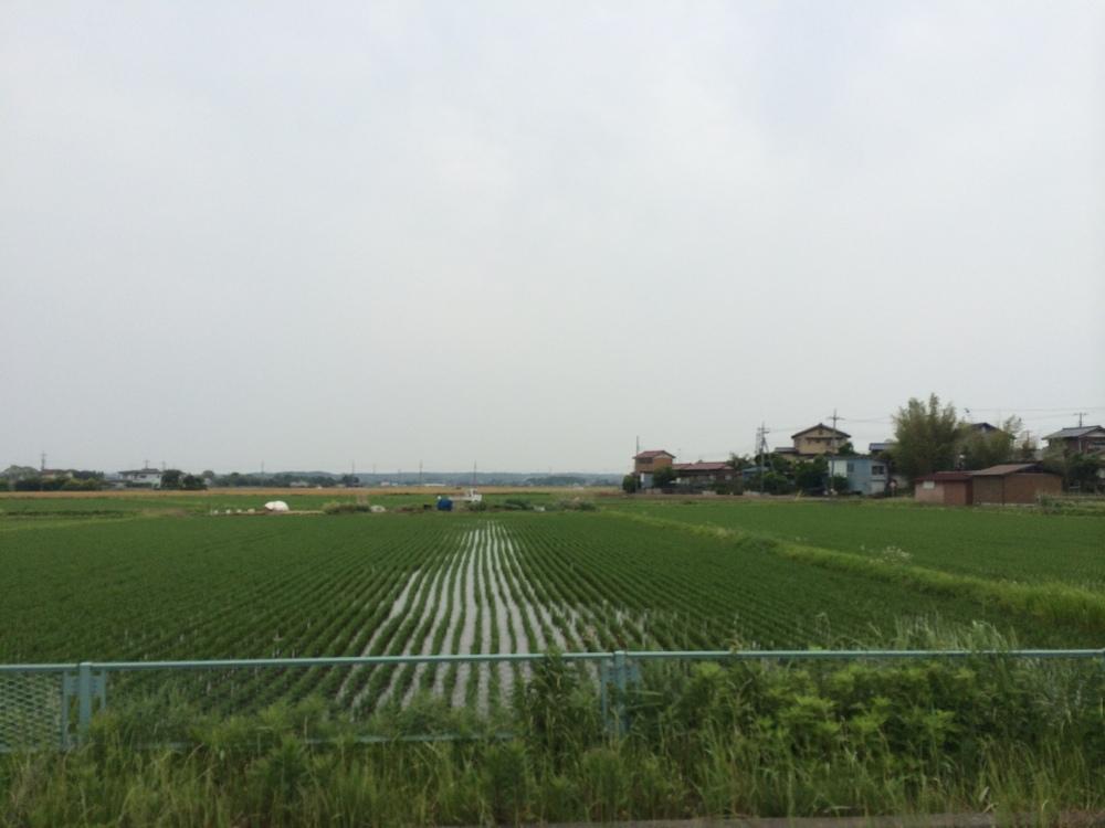 Infinite rice field.