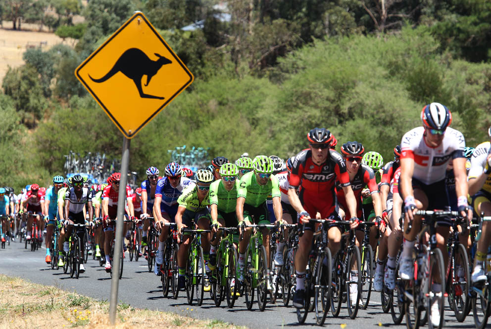 The peloton on the look-out for Kangaroos