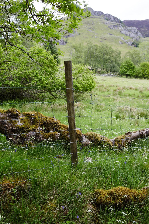 Scotland_0579.jpg