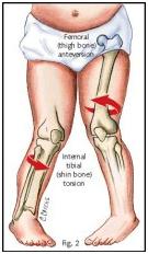 kneebones.jpg