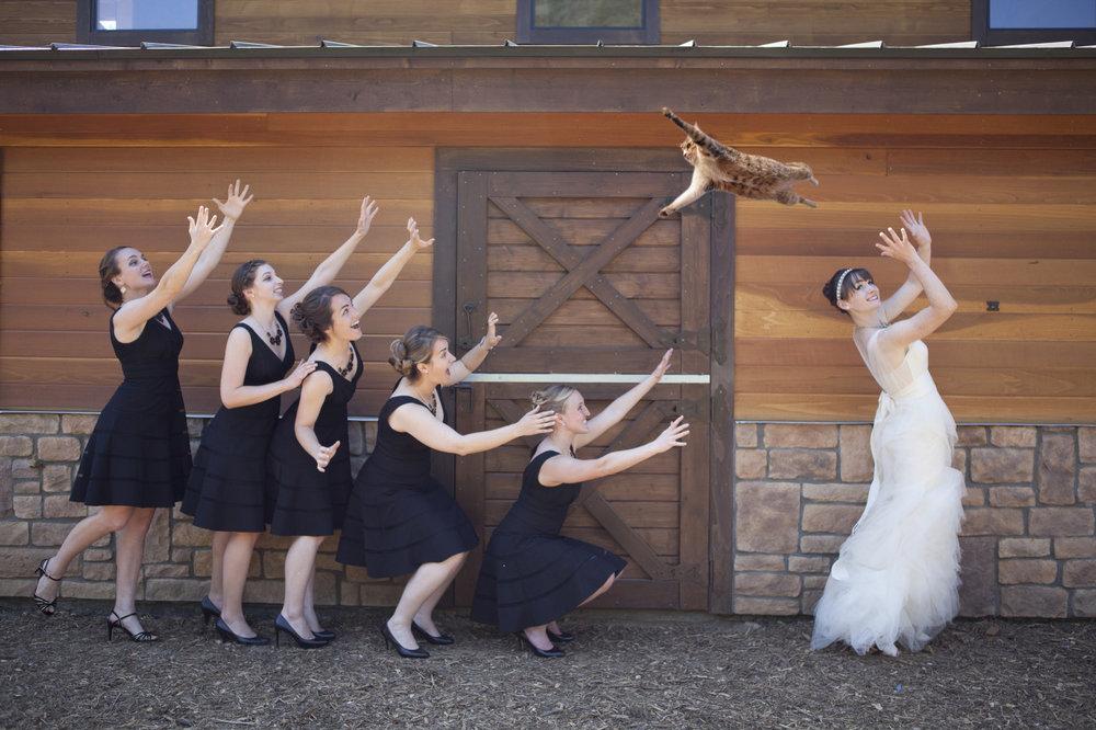 FOTO:  Brides Throwing Cats .
