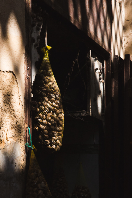 morocco-fez-snails.jpg