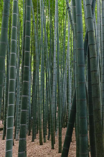 bamboo-temple-japan.jpg