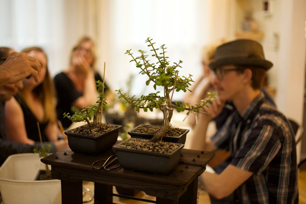 Colin's Bonsai Workshop.jpg