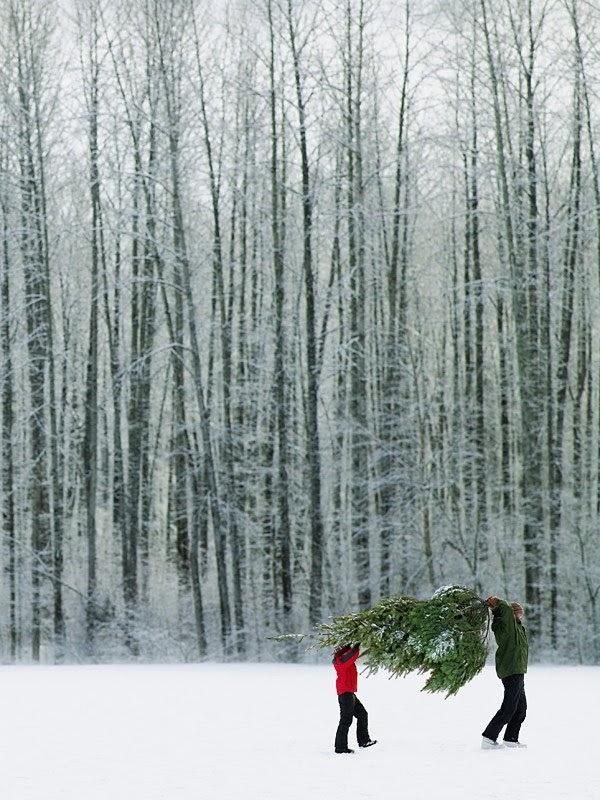 holiday mood board snow christmas