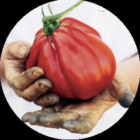 circle_tomato.png