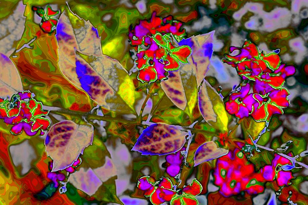"""""""Fleurs Fantastico"""" 2013 by Chuck Riech"""