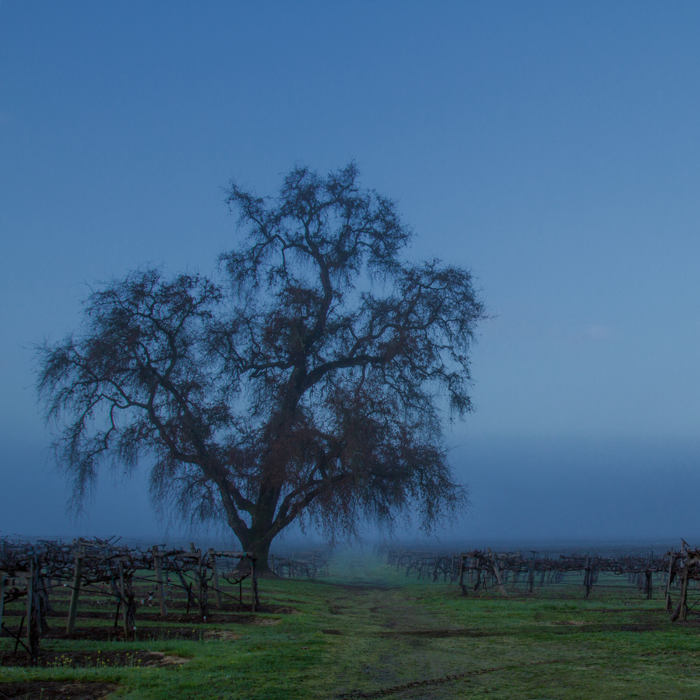 Asti.Tree.jpg