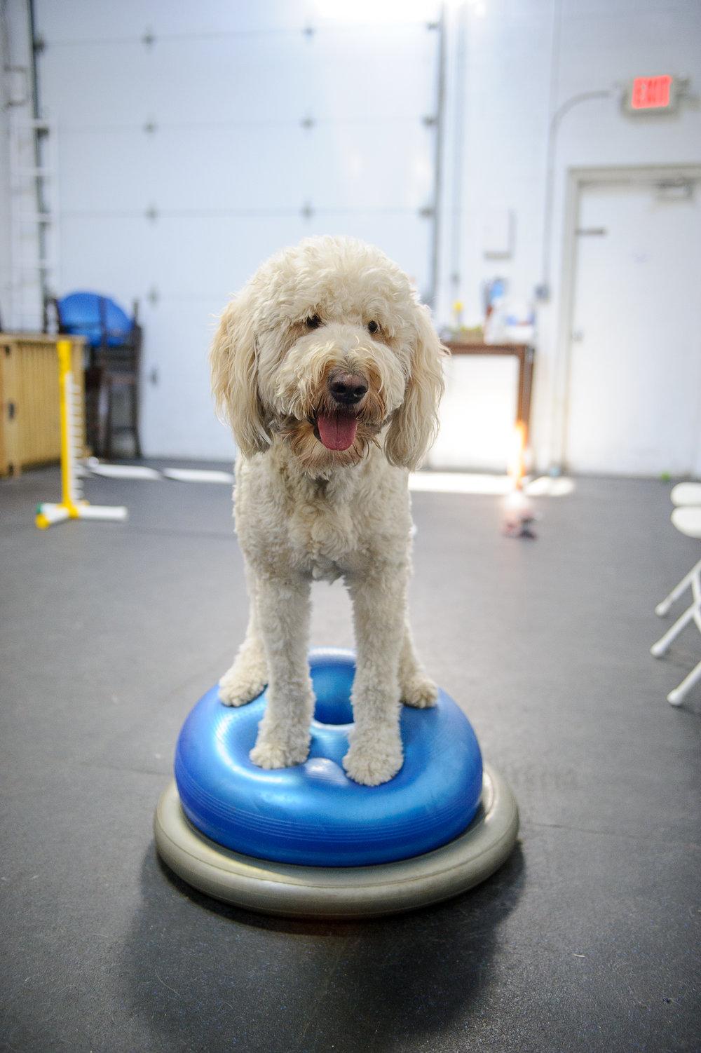 ALYPD Frolic Dogs-6155.jpg