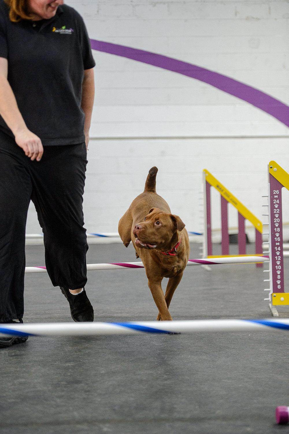 ALYPD18 Frolic Dogs-4968.jpg