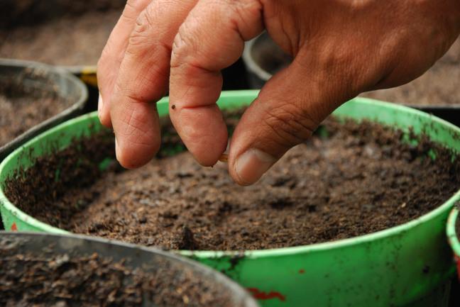 planting-seed.jpg