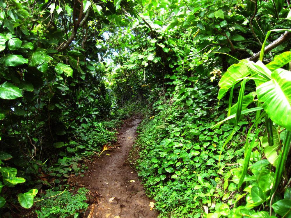 jungle_path_by_renegadellf.jpg