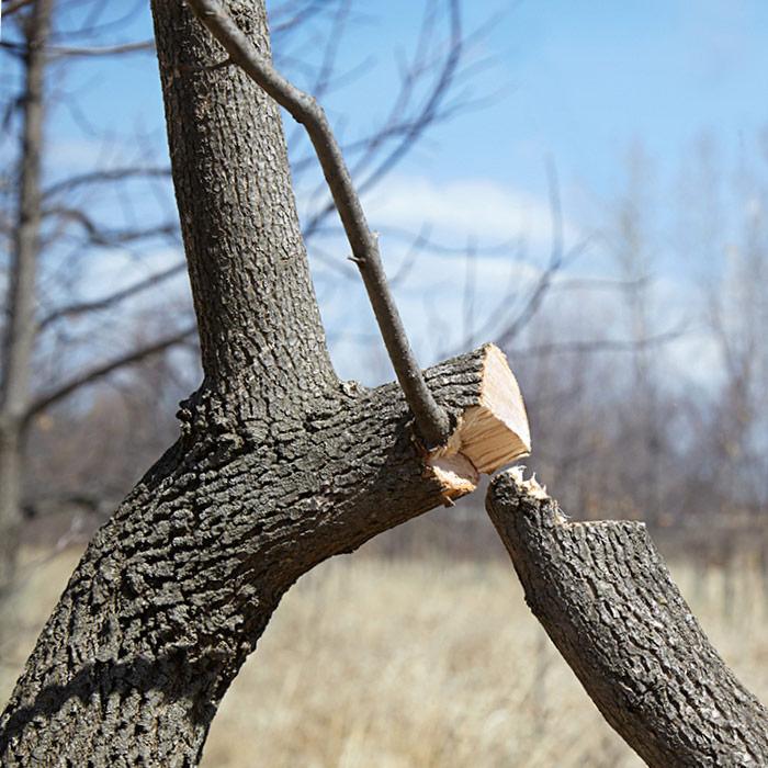 Cut Branch.jpg