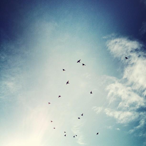 Birds (Taken with instagram)