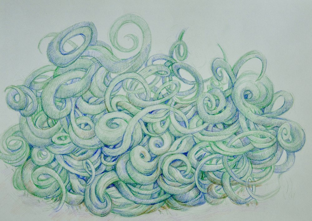 Tendril Study,   2018  Colored pencil on paper