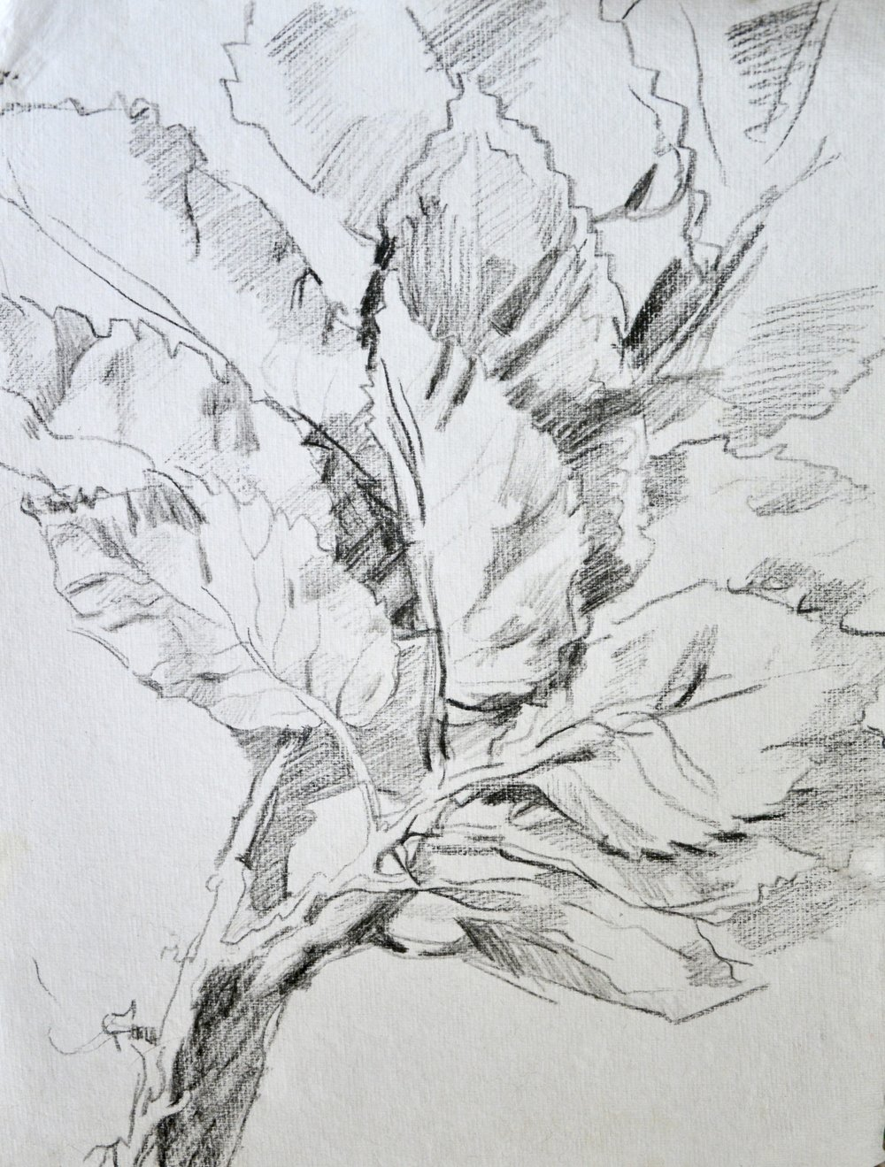 Leaf deposit,   2016  China marker on paper