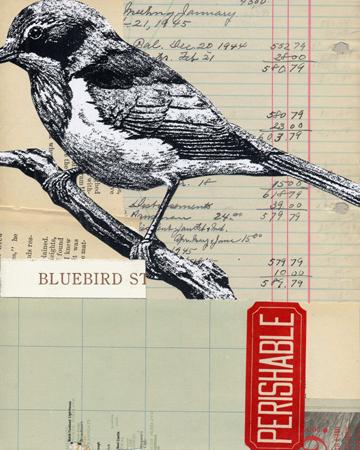 bluebird3.jpg