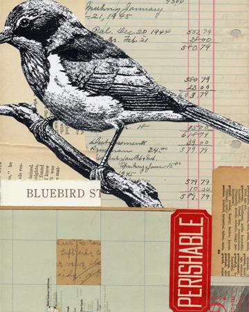 bluebird4.jpg