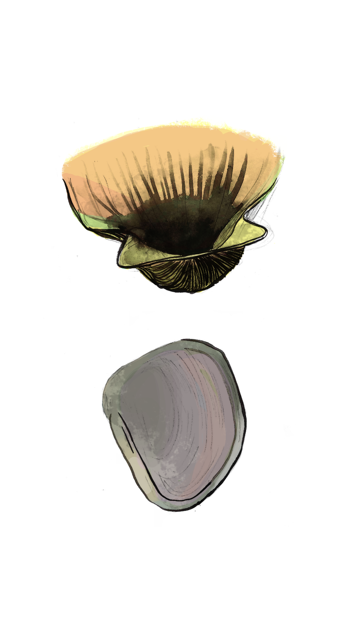 shells colored.png