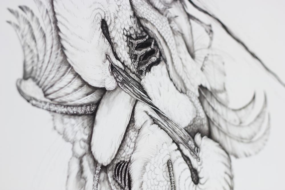 Ardea Alba (Detail Shot)